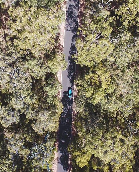 yallingup-trees-western-australia