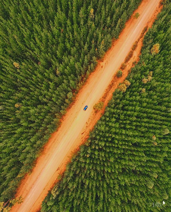 Dwellingup-pine-forrest